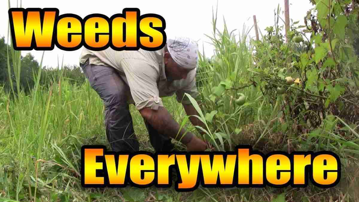 Брэдли Любящий КРАЙНЯЯ КОРРУПЦИЯ В АМЕРИКЕ Garden-full-of-weeds-1-e1613748132830