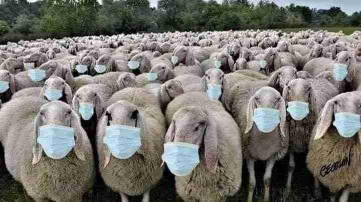 Брэдли  Любящий - О, МОИ ДОРОГИЕ БРАТЬЯ И СЕСТРЫ, ПОЧЕМУ ВЫ НЕ СЛУШАЕТЕ? Sheep-Two