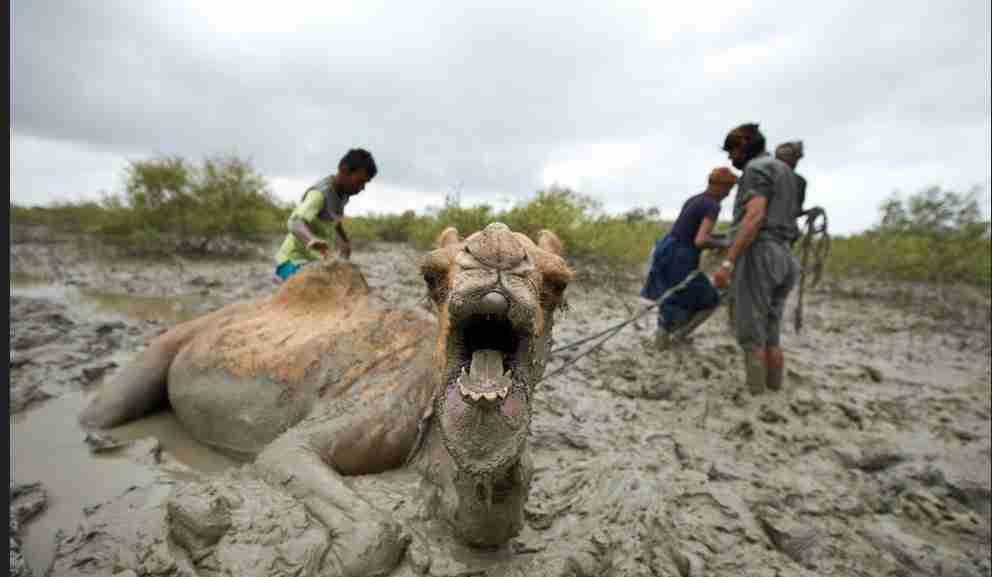 Брэдли Любящий ТЫ ПРОСТО НЕ МОЖЕШЬ ВЫДУМАТЬ ВСЕ ЭТО... ДАЖЕ НЕБЕСА ПРЕБЫВАЮТ В ПОЛНОМ НЕВЕРИИ Camel